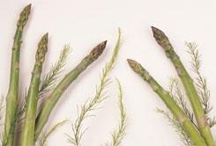 Asparagus spears and fronds