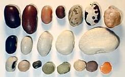 Various dried beans
