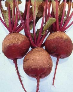 Typical beets